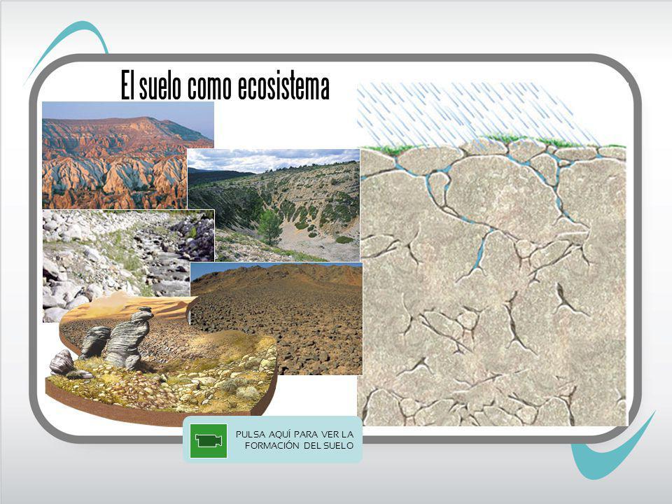 El suelo como ecosistema PULSA AQUÍ PARA VER LA FORMACIÓN DEL SUELO