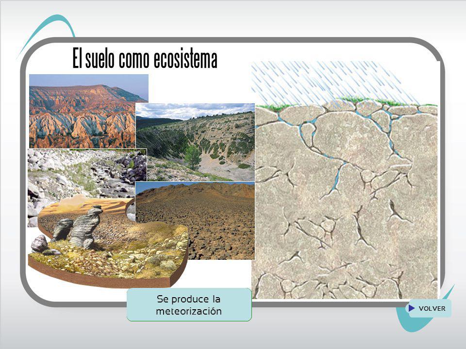 VOLVER El suelo como ecosistema Suelo desarrollado, se instalan animales Formación de horizontes Se instalan seres vivos que disgregan las rocas Se produce la meteorización