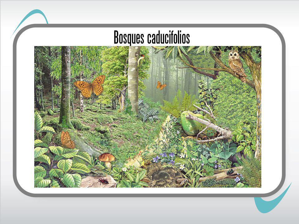 Bosques caducifolios