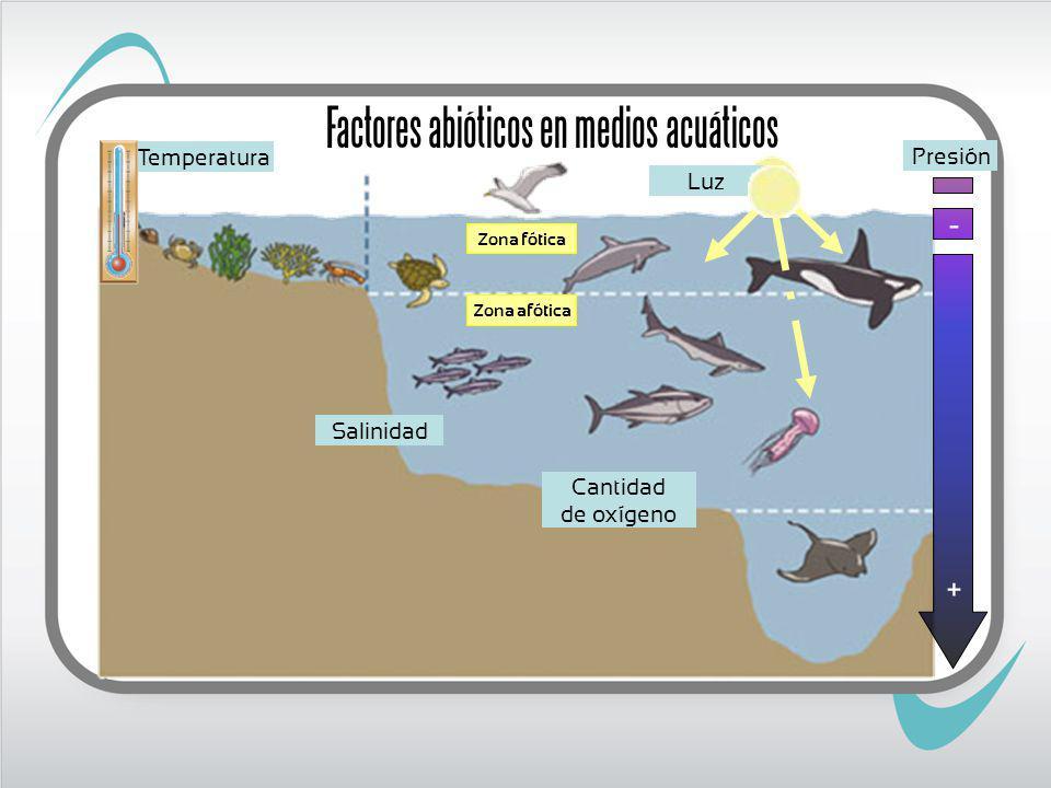 Temperatura Factores abióticos en medios acuáticos Luz Zona fótica Zona afótica Presión - + Salinidad Cantidad de oxígeno