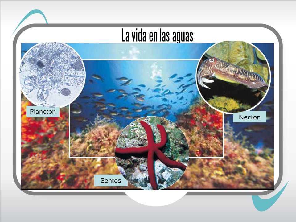 La vida en las aguas Plancton Necton Bentos