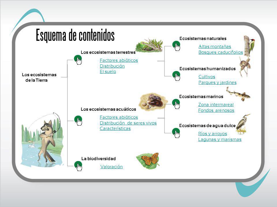 Ratón Cernícalo Zorro Topillo Especies cultivadas y plantas de márgenes Cultivos Ratonero Avutarda Conejo