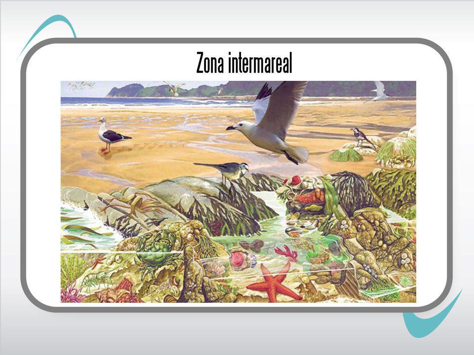 Zona intermareal