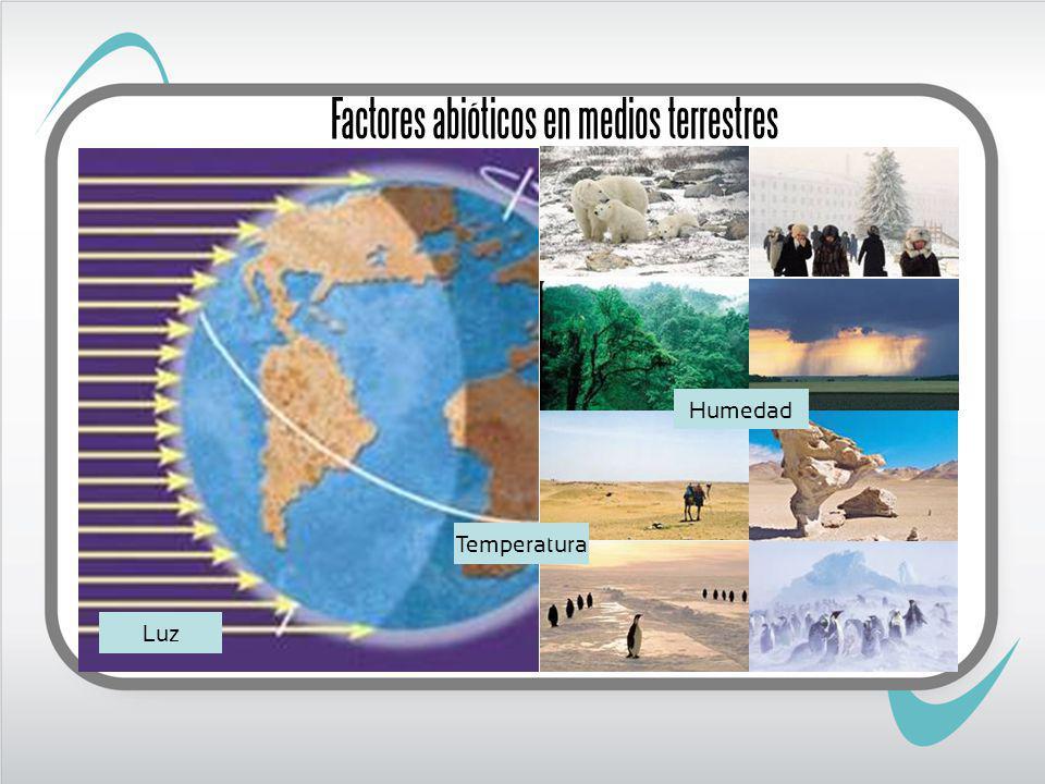 Factores abióticos en medios terrestres Luz Temperatura Humedad