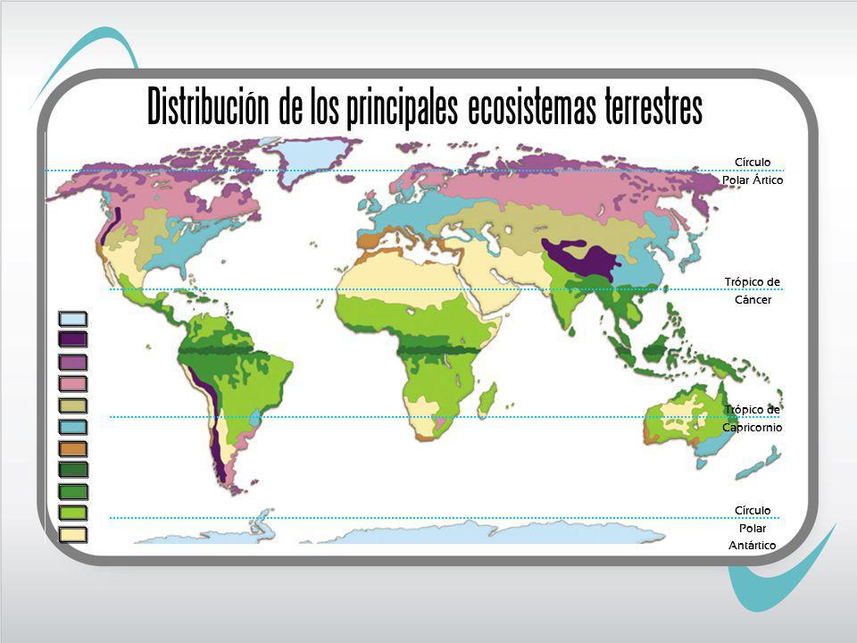 Trópico de Cáncer Trópico de Capricorni o DESIERTO FRÍO Zona climática: Fría Círculo Polar Ártico Círculo Polar Antártico Distribución de los principales ecosistemas terrestres
