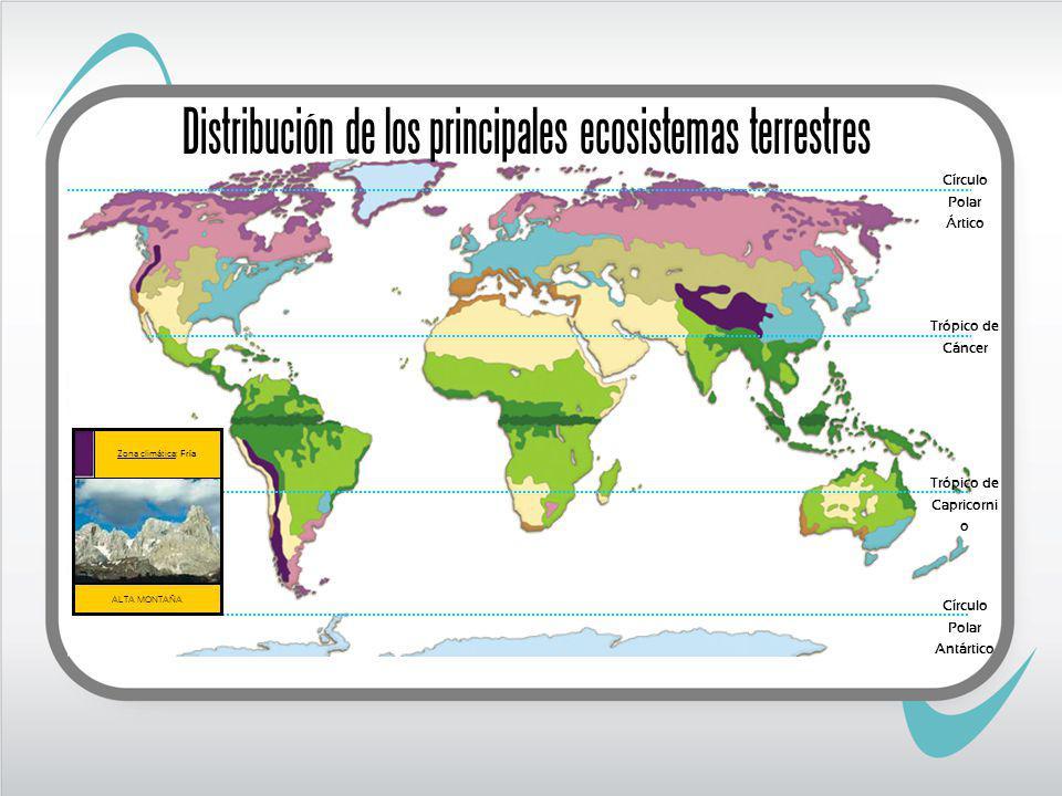Circulo Polar Ártico Trópico de Cáncer Trópico de Capricornio Circulo Polar Antártico TUNDRA Zona climática: Fría Distribución de los principales ecosistemas terrestres