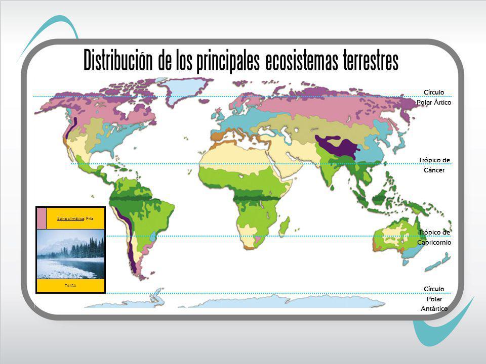 Trópico de Cáncer Trópico de Capricornio TAIGA Zona climática: Fría Círculo Polar Ártico Círculo Polar Antártico Distribución de los principales ecosistemas terrestres