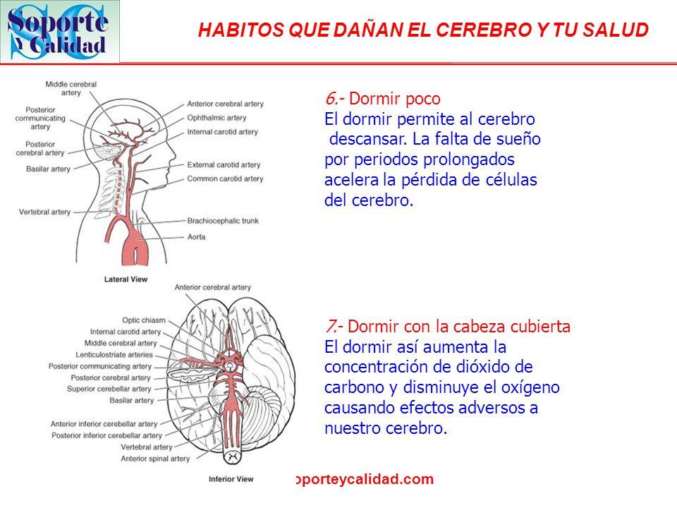 HABITOS QUE DAÑAN EL CEREBRO Y TU SALUD www.soporteycalidad.com 8.