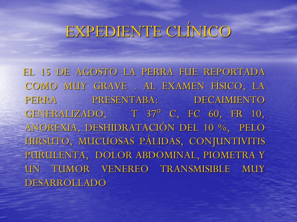 EXPEDIENTE CLÍNICO EL 15 DE AGOSTO LA PERRA FUE REPORTADA COMO MUY GRAVE. AL EXAMEN FÍSICO, LA PERRA PRESENTABA: DECAIMIENTO GENERALIZADO, T 37° C, FC