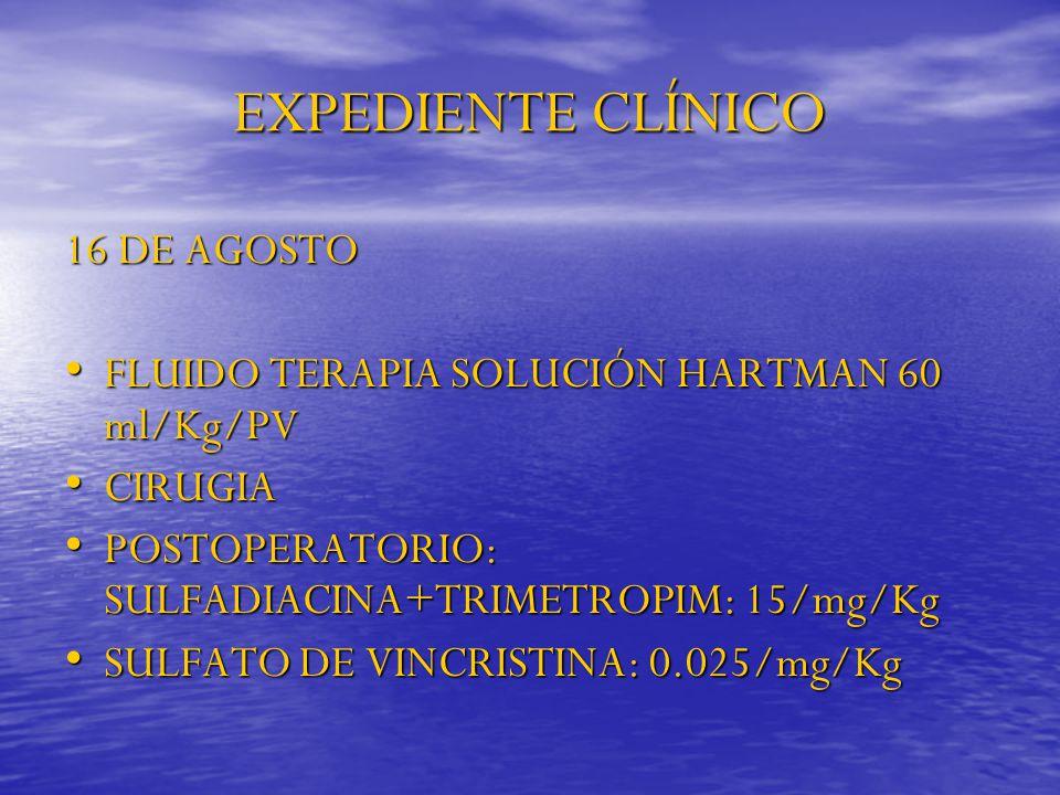 EXPEDIENTE CLÍNICO 16 DE AGOSTO FLUIDO TERAPIA SOLUCIÓN HARTMAN 60 ml/Kg/PV FLUIDO TERAPIA SOLUCIÓN HARTMAN 60 ml/Kg/PV CIRUGIA CIRUGIA POSTOPERATORIO