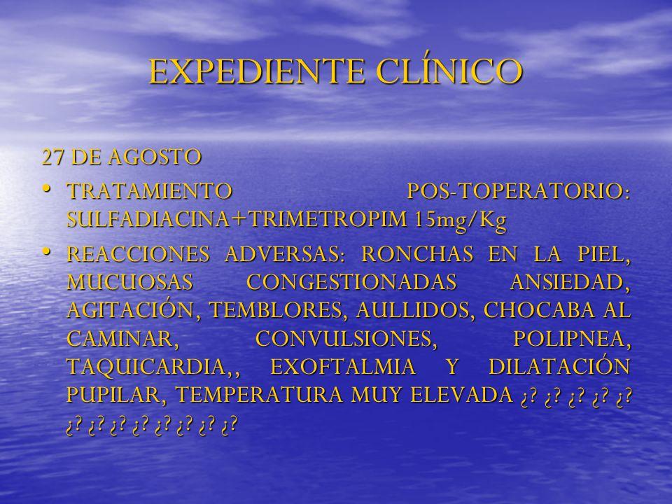 EXPEDIENTE CLÍNICO 27 DE AGOSTO TRATAMIENTO POS-TOPERATORIO: SULFADIACINA+TRIMETROPIM 15mg/Kg TRATAMIENTO POS-TOPERATORIO: SULFADIACINA+TRIMETROPIM 15