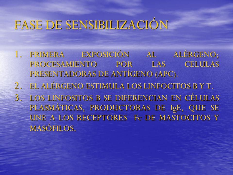 FASE DE SENSIBILIZACIÓN 1. PRIMERA EXPOSICIÓN AL ALÉRGENO; PROCESAMIENTO POR LAS CELULAS PRESENTADORAS DE ANTÍGENO (APC). 2. EL ALÉRGENO ESTIMULA LOS