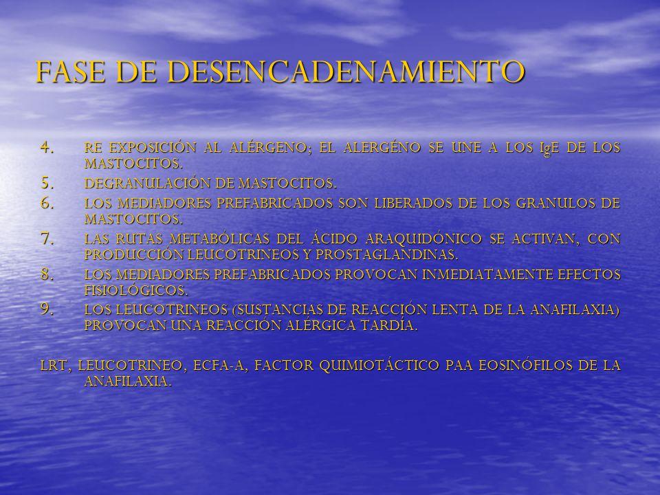 FASE DE DESENCADENAMIENTO 4. RE EXPOSICIÓN AL ALÉRGENO; EL ALERGÉNO SE UNE A LOS IgE DE LOS MASTOCITOS. 5. DEGRANULACIÓN DE MASTOCITOS. 6. LOS MEDIADO