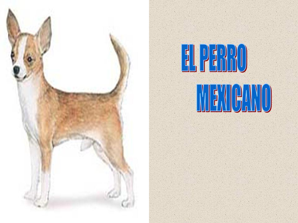 Un señor va de cacería al África y se lleva su perrito Chihuahueño para no sentirse solo en ese lugar.