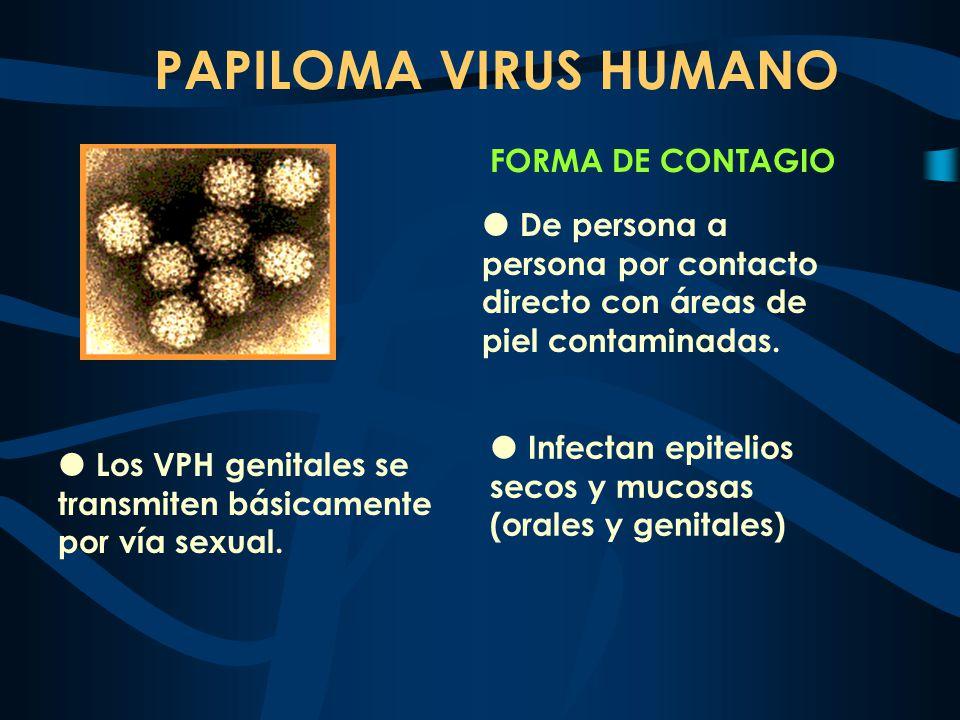PAPILOMA VIRUS HUMANO FORMA DE CONTAGIO De persona a persona por contacto directo con áreas de piel contaminadas. Los VPH genitales se transmiten bási