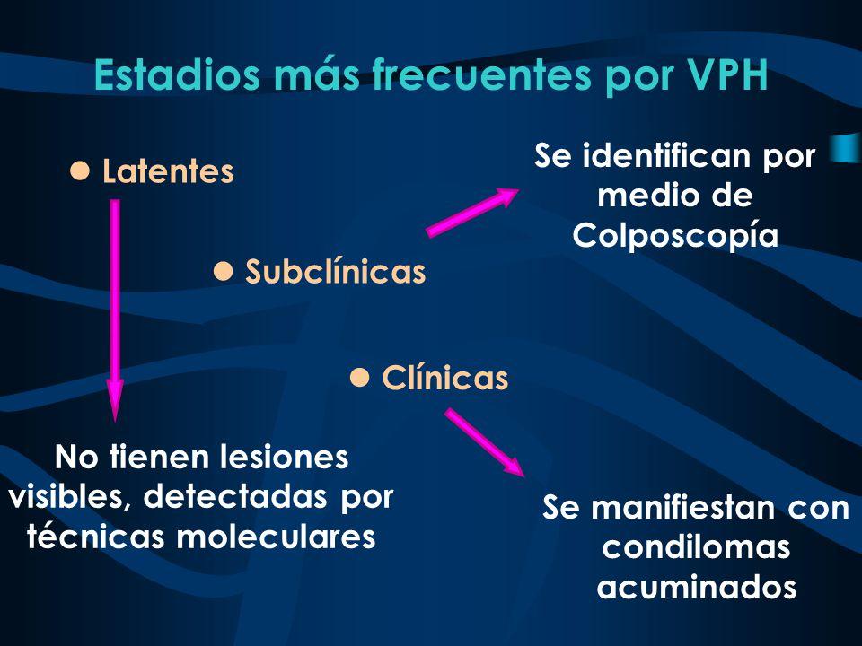 Estadios más frecuentes por VPH Se identifican por medio de Colposcopía l Subclínicas l Clínicas Se manifiestan con condilomas acuminados l Latentes N