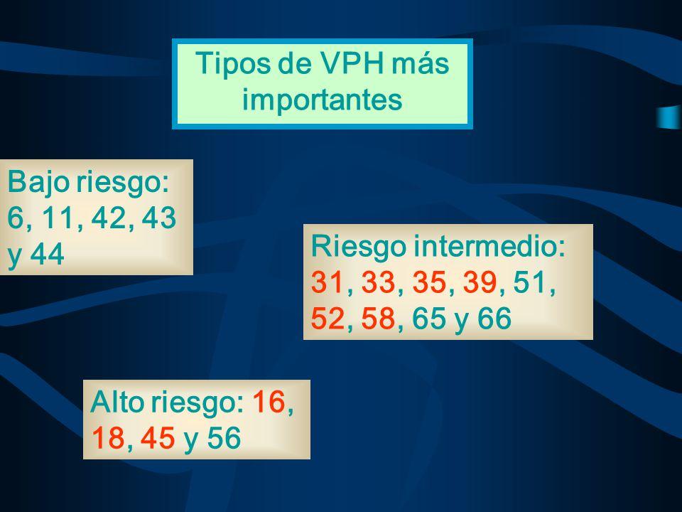 Bajo riesgo: 6, 11, 42, 43 y 44 Alto riesgo: 16, 18, 45 y 56 Riesgo intermedio: 31, 33, 35, 39, 51, 52, 58, 65 y 66 Tipos de VPH más importantes