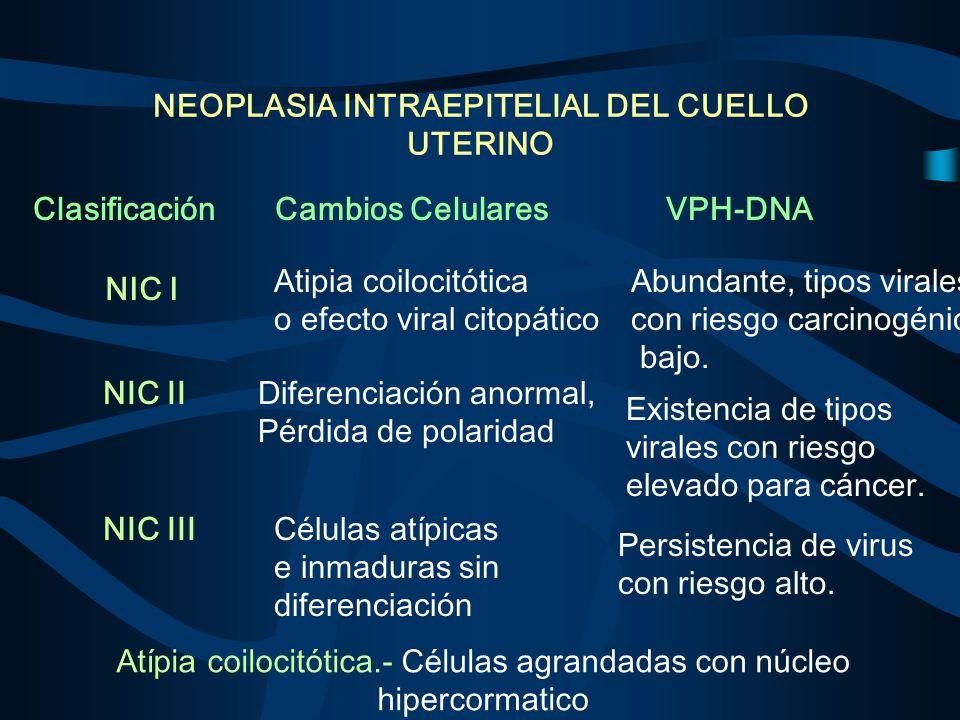 NEOPLASIA INTRAEPITELIAL DEL CUELLO UTERINO Clasificación NIC I Atipia coilocitótica o efecto viral citopático Abundante, tipos virales con riesgo car