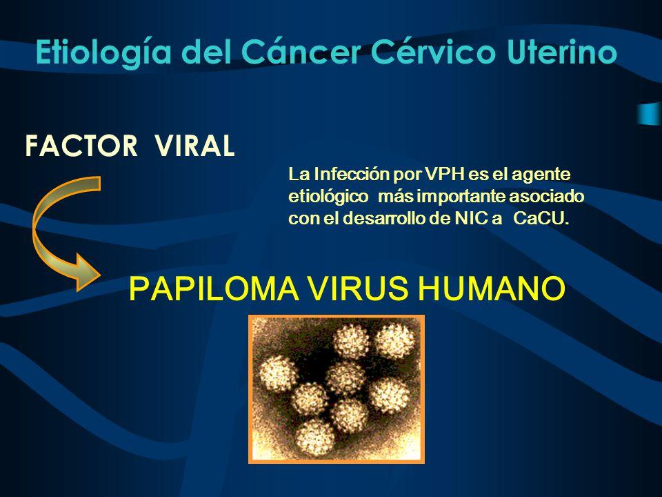 Etiología del Cáncer Cérvico Uterino. FACTOR VIRAL PAPILOMA VIRUS HUMANO La Infección por VPH es el agente etiológico más importante asociado con el d