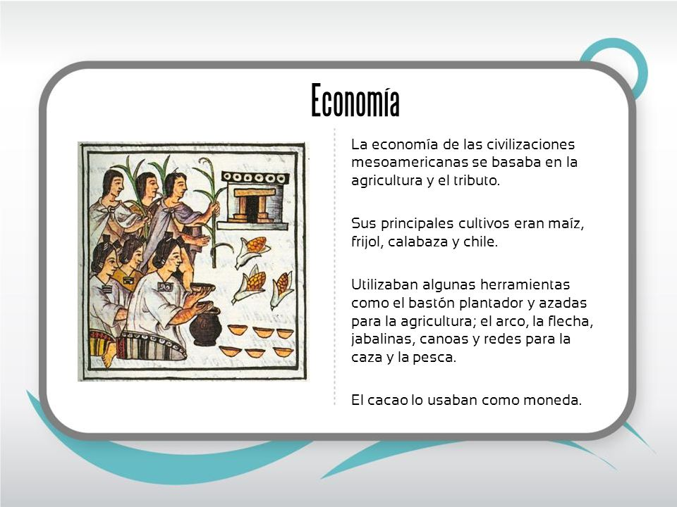 Economía La economía de las civilizaciones mesoamericanas se basaba en la agricultura y el tributo. Sus principales cultivos eran maíz, frijol, calaba