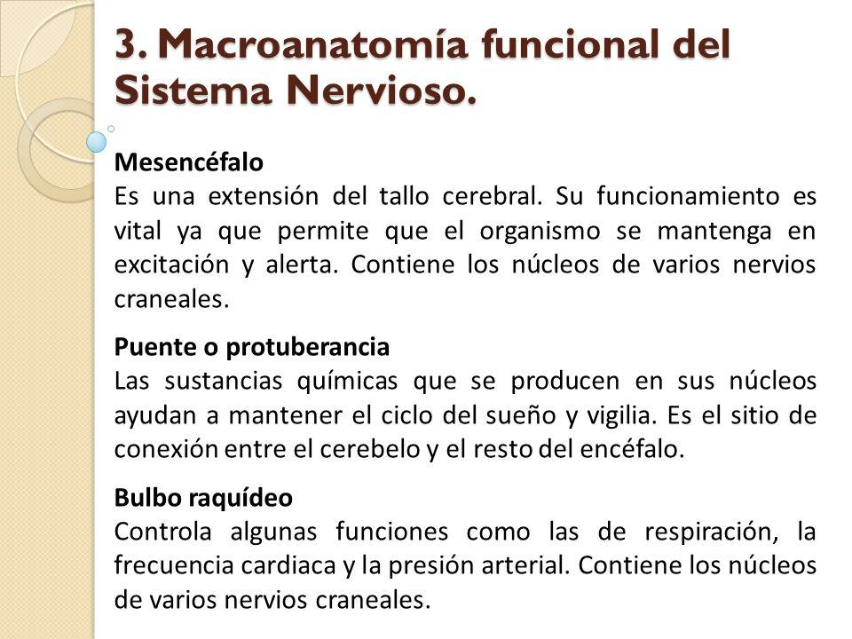 Mesencéfalo Es una extensión del tallo cerebral. Su funcionamiento es vital ya que permite que el organismo se mantenga en excitación y alerta. Contie