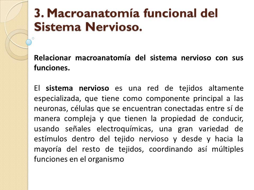 Relacionar macroanatomía del sistema nervioso con sus funciones. El sistema nervioso es una red de tejidos altamente especializada, que tiene como com