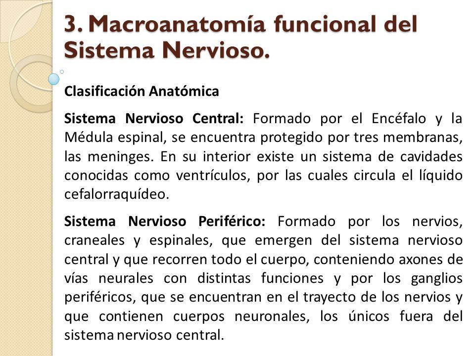 Clasificación Anatómica Sistema Nervioso Central: Formado por el Encéfalo y la Médula espinal, se encuentra protegido por tres membranas, las meninges