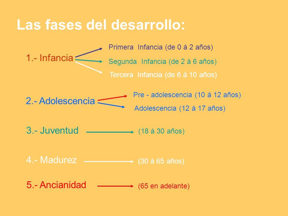 Las fases del desarrollo: 1.- Infancia 2.- Adolescencia 3.- Juventud 4.- Madurez 5.- Ancianidad Primera Infancia (de 0 á 2 años) Segunda Infancia (de 2 á 6 años) Tercera Infancia (de 6 á 10 años) Pre - adolescencia (10 á 12 años) Adolescencia (12 á 17 años) (18 á 30 años) (30 á 65 años) (65 en adelante)