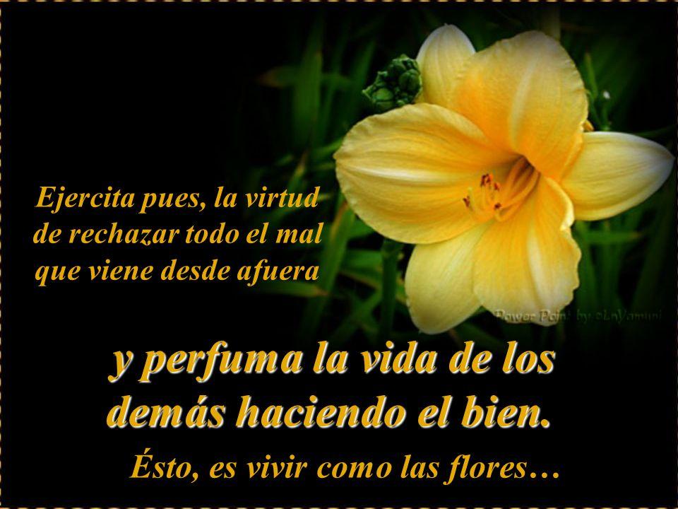 Ejercita pues, la virtud de rechazar todo el mal que viene desde afuera Ésto, es vivir como las flores… y yy y perfuma la vida de los demás haciendo el bien.