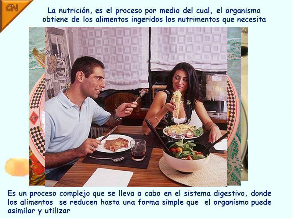 La nutrición, es el proceso por medio del cual, el organismo obtiene de los alimentos ingeridos los nutrimentos que necesita Es un proceso complejo que se lleva a cabo en el sistema digestivo, donde los alimentos se reducen hasta una forma simple que el organismo puede asimilar y utilizar