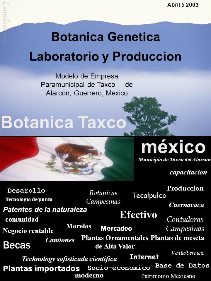 Modelo de Empresa Paramunicipal de Taxco de Alarcon, Guerrero, Mexico TAXCO, MEXICO Abril 5 2003 Botanica Genetica Laboratorio y Produccion Botanica T