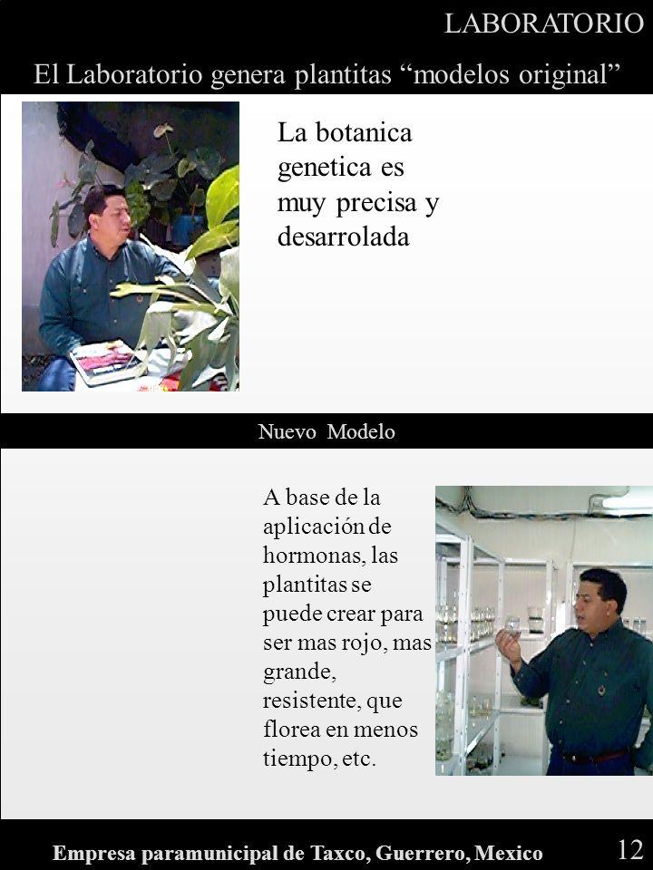 El Laboratorio genera plantitas modelos original Nuevo Modelo LABORATORIO 12 Empresa paramunicipal de Taxco, Guerrero, Mexico La botanica genetica es