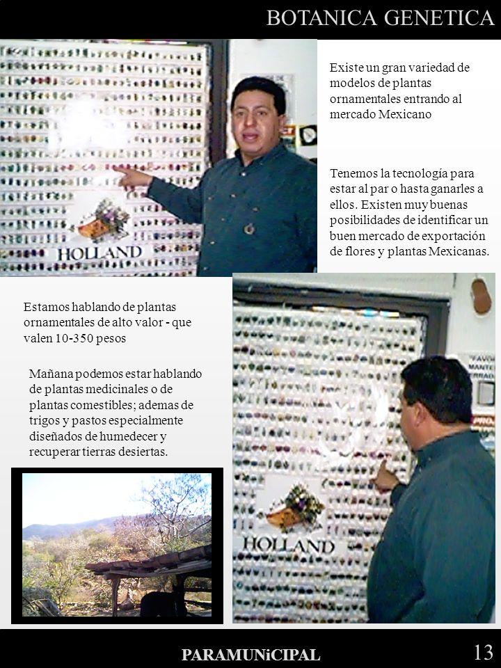BOTANICA GENETICA 13 PARAMUNiCIPAL Existe un gran variedad de modelos de plantas ornamentales entrando al mercado Mexicano Tenemos la tecnología para