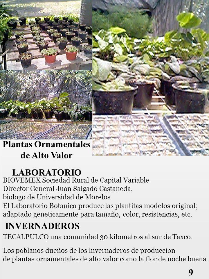 patentes cualquier cambio genetico a una planta permite que alguine podia patentarla.