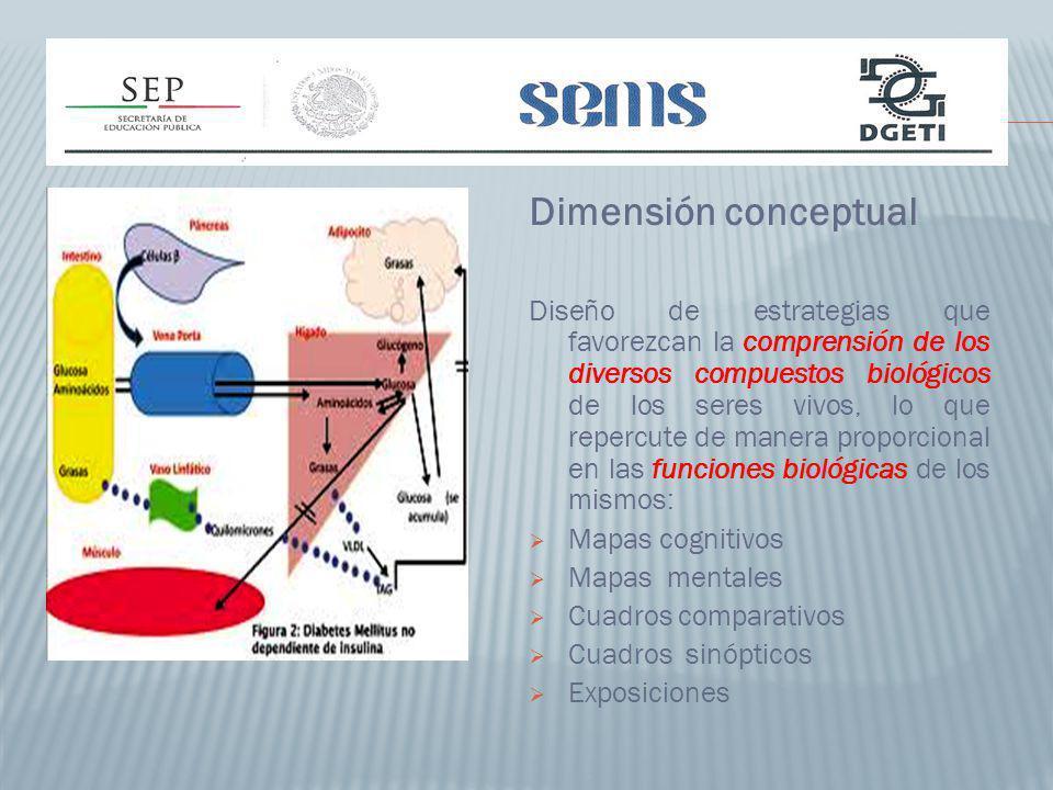 Dimensión conceptual Diseño de estrategias que favorezcan la comprensión de los diversos compuestos biológicos de los seres vivos, lo que repercute de manera proporcional en las funciones biológicas de los mismos: Mapas cognitivos Mapas mentales Cuadros comparativos Cuadros sinópticos Exposiciones
