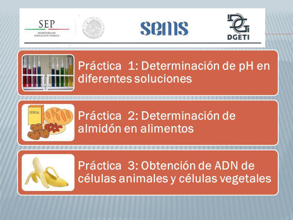 Práctica 1: Determinación de pH en diferentes soluciones Práctica 2: Determinación de almidón en alimentos Práctica 3: Obtención de ADN de células animales y células vegetales