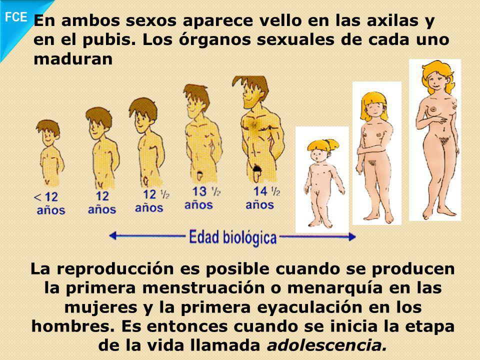 Algunos niños crecen rápidamente, aumentan de peso y parecen más fuertes; otros se tardan un poco más o crecen menos Las niñas también aumentan de estatura, sus senos crecen y se ensanchan sus caderas FCE