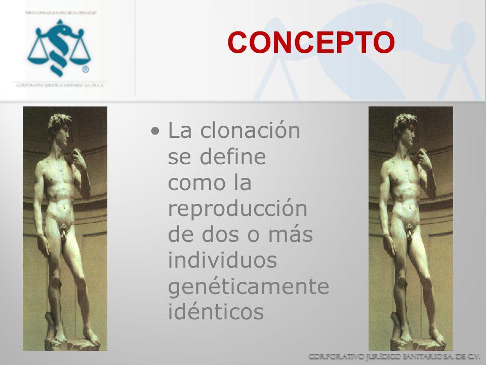 CONCEPTO La clonación se define como la reproducción de dos o más individuos genéticamente idénticos