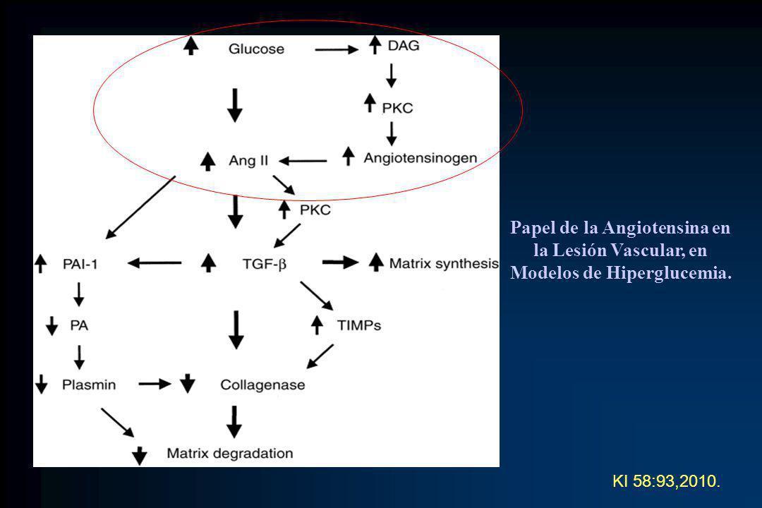 KI 58:93,2010. Papel de la Angiotensina en la Lesión Vascular, en Modelos de Hiperglucemia.