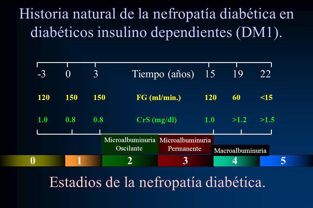 Historia natural de la nefropatía diabética en diabéticos insulino dependientes (DM1). -303 Tiempo (años)151922 120150150 FG (ml/min.)12060<15 1.00.80