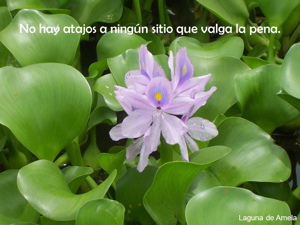 Laguna de Amela No hay atajos a ningún sitio que valga la pena.