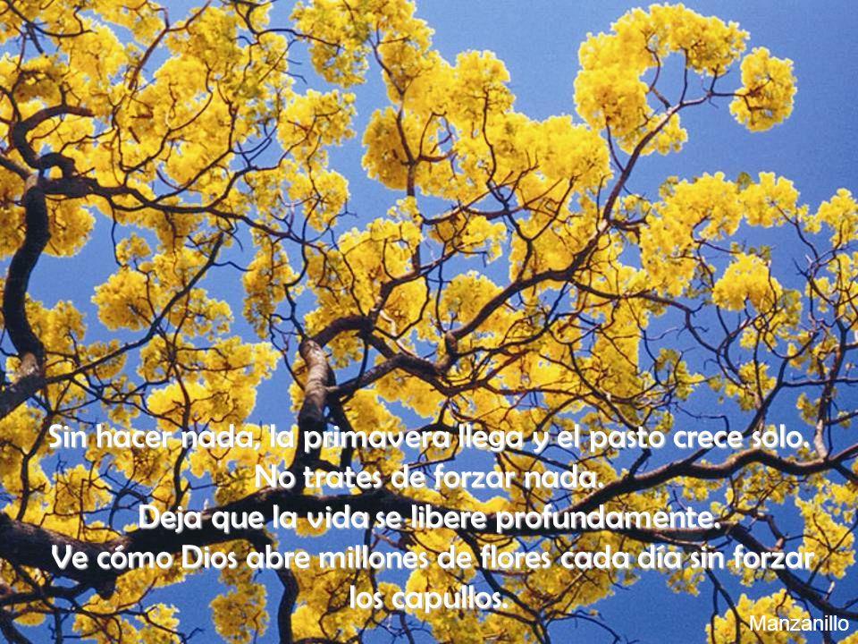 Sin hacer nada, la primavera llega y el pasto crece solo. No trates de forzar nada. Deja que la vida se libere profundamente. Ve cómo Dios abre millon