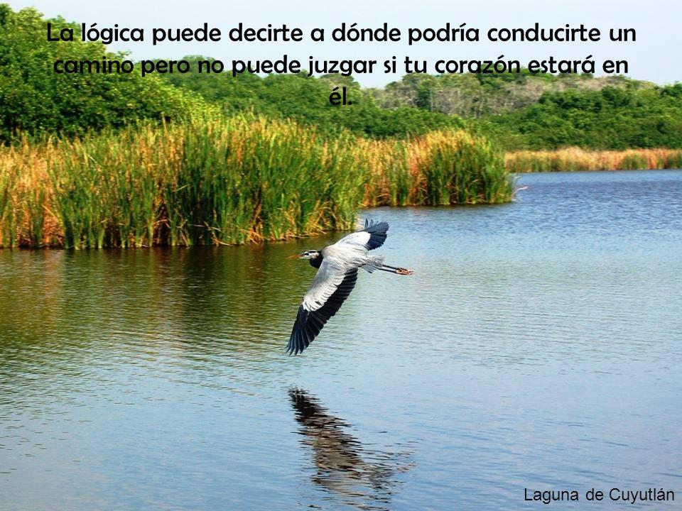 Laguna de Cuyutlán La lógica puede decirte a dónde podría conducirte un camino pero no puede juzgar si tu corazón estará en él.