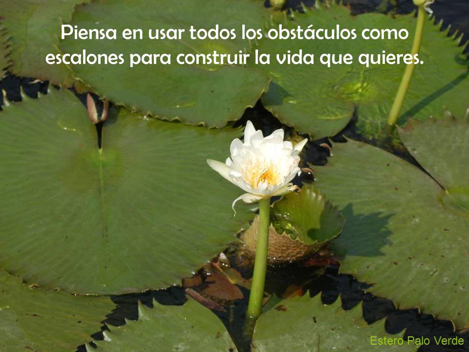 Estero Palo Verde Piensa en usar todos los obstáculos como escalones para construir la vida que quieres.