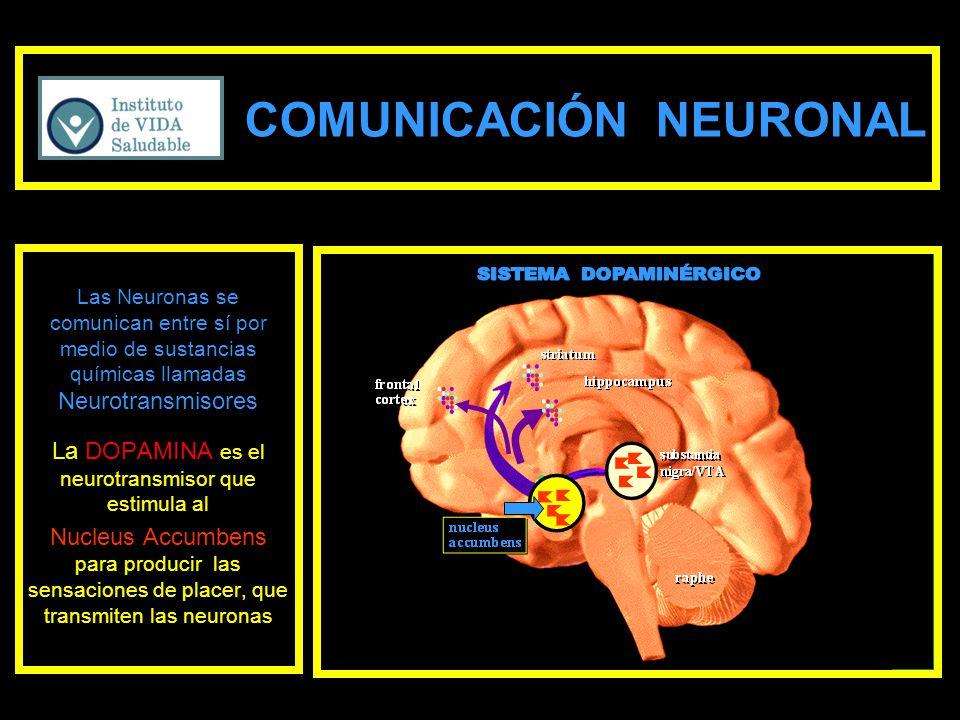 COMUNICACIÓN NEURONAL Las Neuronas se comunican entre sí por medio de sustancias químicas llamadas Neurotransmisores La DOPAMINA es el neurotransmisor