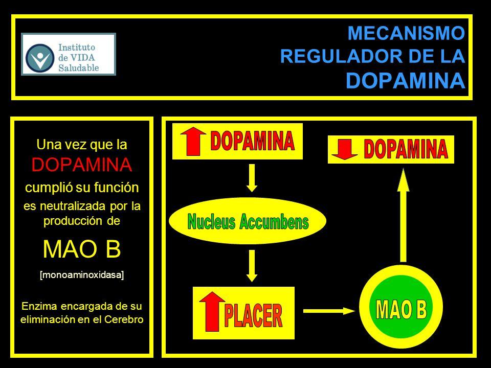 MECANISMO REGULADOR DE LA DOPAMINA Una vez que la DOPAMINA cumplió su función es neutralizada por la producción de MAO B [monoaminoxidasa] Enzima enca