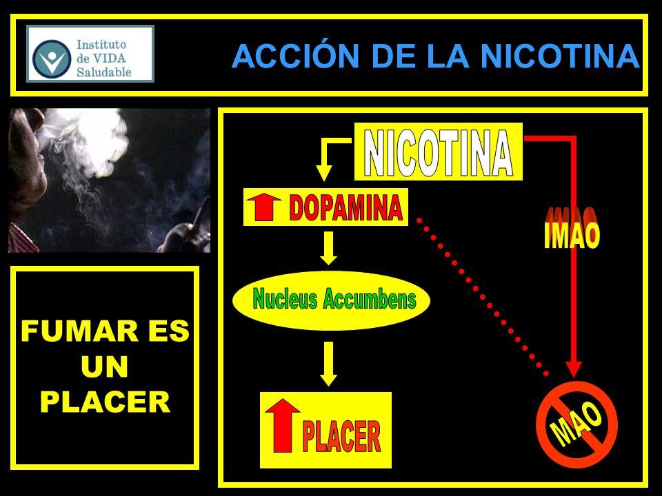ACCIÓN DE LA NICOTINA FUMAR ES UN PLACER