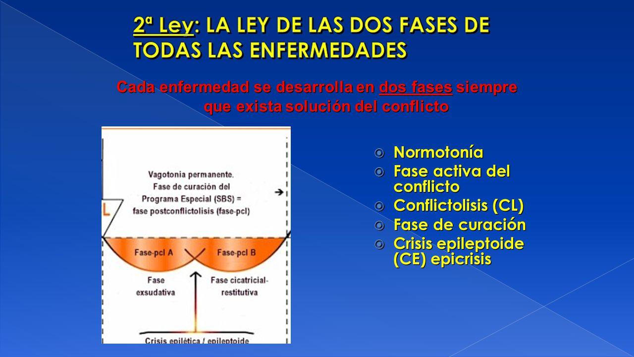 Normotonía Fase activa del conflicto Conflictolisis (CL) Fase de curación Crisis epileptoide (CE) epicrisis Normotonía Fase activa del conflicto Confl