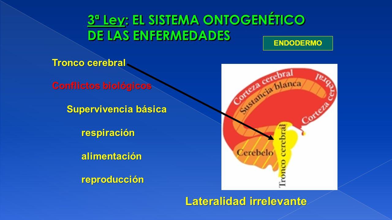 ENDODERMO Tronco cerebral Conflictos biológicos Supervivencia básica respiraciónalimentaciónreproducción Lateralidad irrelevante