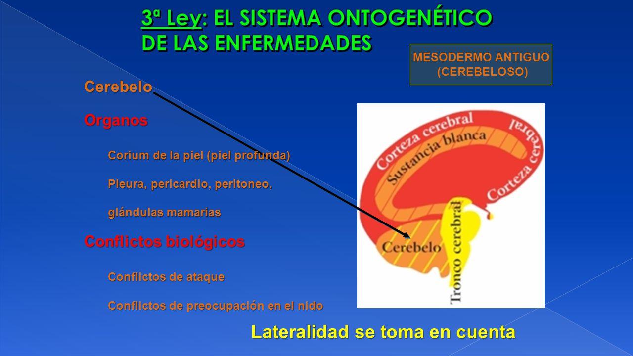 Organos Corium de la piel (piel profunda) Pleura, pericardio, peritoneo, glándulas mamarias MESODERMO ANTIGUO (CEREBELOSO) Conflictos biológicos Confl